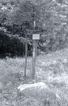 Die neue Soleiche auf dem Thüster Berg mit Gedenkstein.