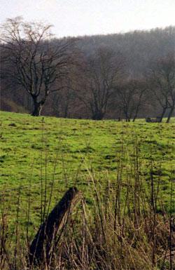 Weide mit Schneitelbäumen. (Foto: Wiegand, Nov. 02, HM-XXIX-13)