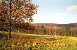 Blick von der Eichengruppe Stieghagen nach Norden. (Foto: Wiegand, Nov. 02, HM-XXIX-14)