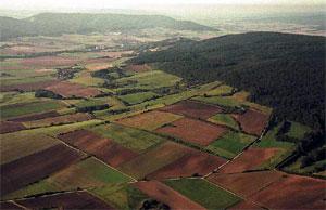Luftbild von Südosten: Heckenlandschaft unterhalb des Thüster Bergs. (Foto: Wiegand, Okt. 02, HM-XXI-9)