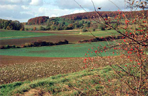 Rosen- und Weißdornhecken gliedern Äcker und Grünland. (Foto: Wiegand, Okt. 02, HM-XXVI-28)