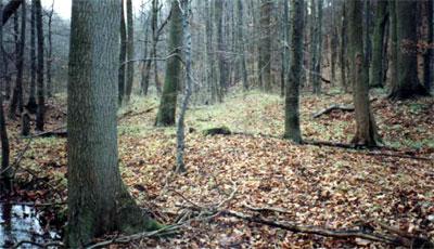 Wölbacker Obernhagen am Rösebach (Foto: Baum, 1989)