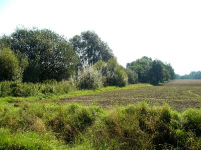 Bäume an der ehemaligen Bahnlinie. (Foto: Kölle, August 2005)